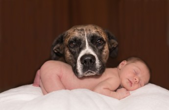 Bringing Home Your Newborn to Your Dog for the First Time